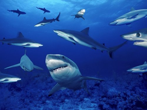 Edward Smethurst - Outcome of Law Society investigation >> No Further Action Shark-infested-waters-500x375