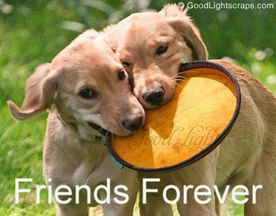 Volim te kao prijatelja, psst slika govori više od hiljadu reči - Page 3 Friends_forever3