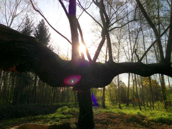 Un arbre extraordinaire Er01