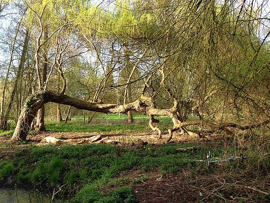 Un arbre extraordinaire Er02