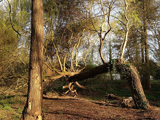 Un arbre extraordinaire Er03