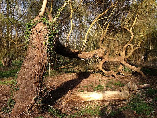 Un arbre extraordinaire Er04