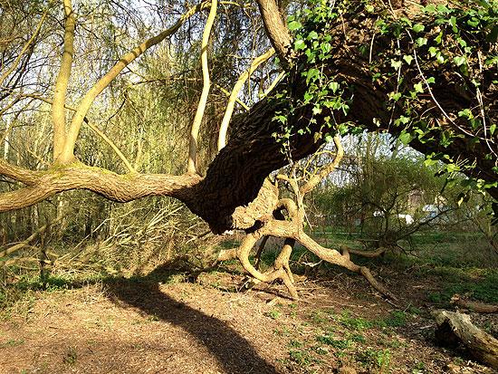 Un arbre extraordinaire Er05