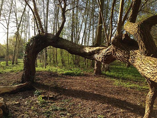 Un arbre extraordinaire Er06