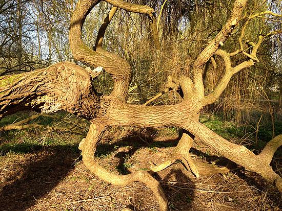Un arbre extraordinaire Er07