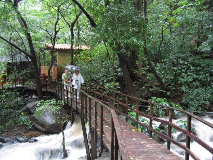 Reflexiones....... para pensar...... Full-rainforest-bridge