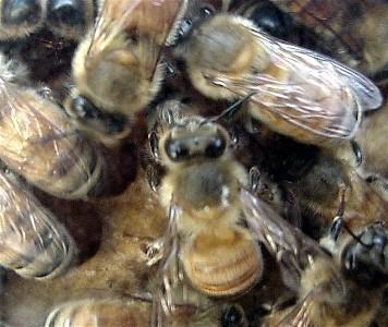 عالم النحل Bee