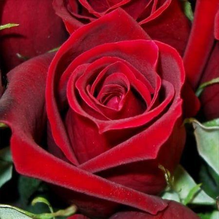 59. Gönülçelen -Inima furata - Heart Stealer - General Discussions - Comentarii Roses