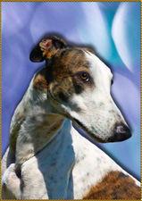 Грейхаунд  ARTEFAKT Triumph of EDELEN - Грато (Grato) Greyhound_Artefakt_Triumph_of_Edelen-_3