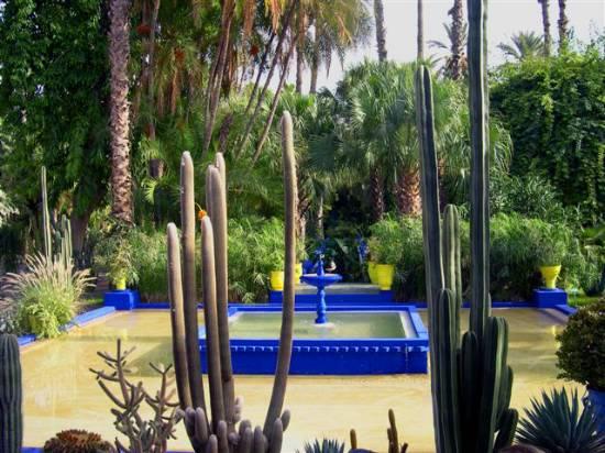 association d'images - Page 2 Jardin-plante-divers-bleu-jardins-