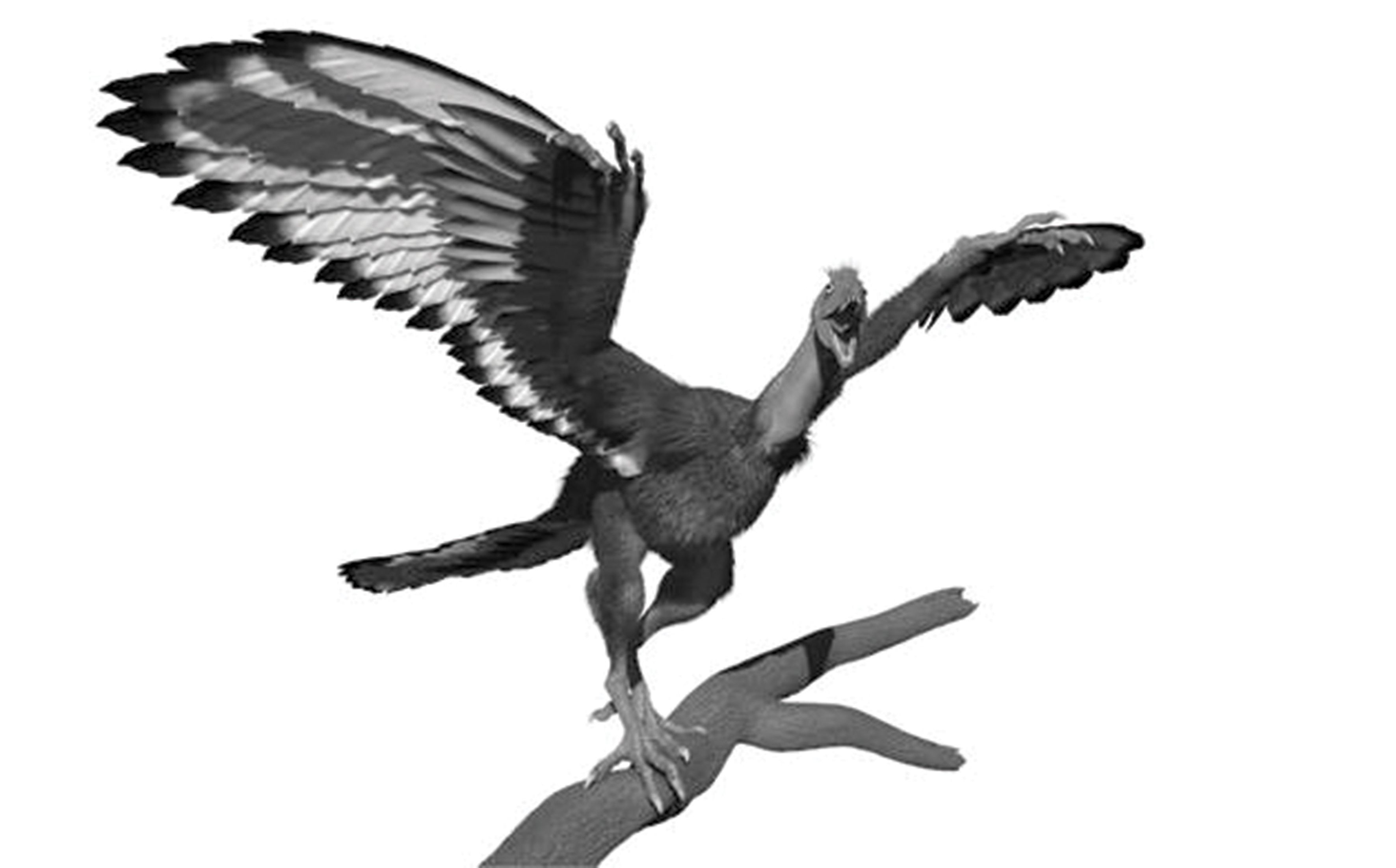 Archaeopteryx : un dinosaure volant, comme un faisan ! By Gurumed.org Archaeopteryx-lithographica-2