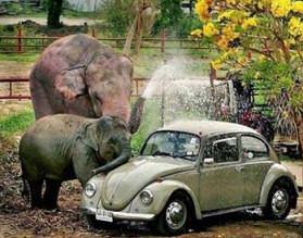 ¿Donde llevar el coche? Elephant_vw