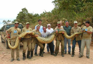 Titanoboa cerrejonensis Snake_huge