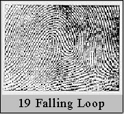 falling loop fingerprints Fal-loop