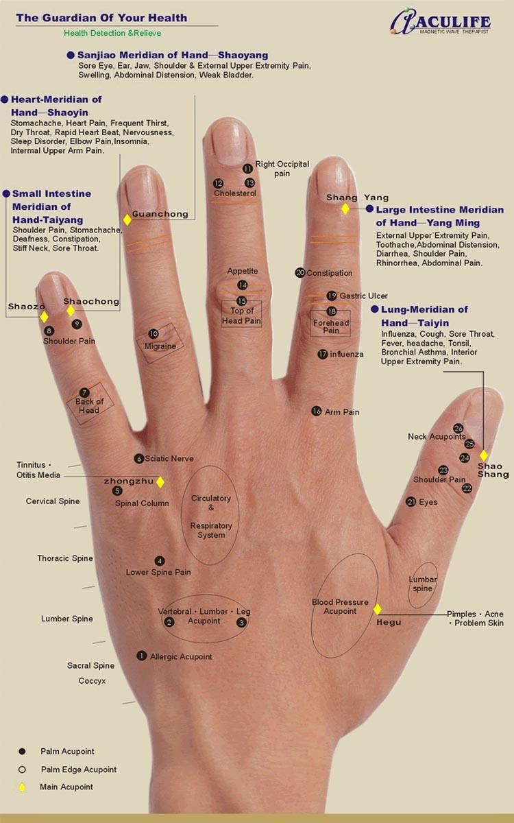 Hand reflexology charts! Hand-reflexology-chart-aculife-2