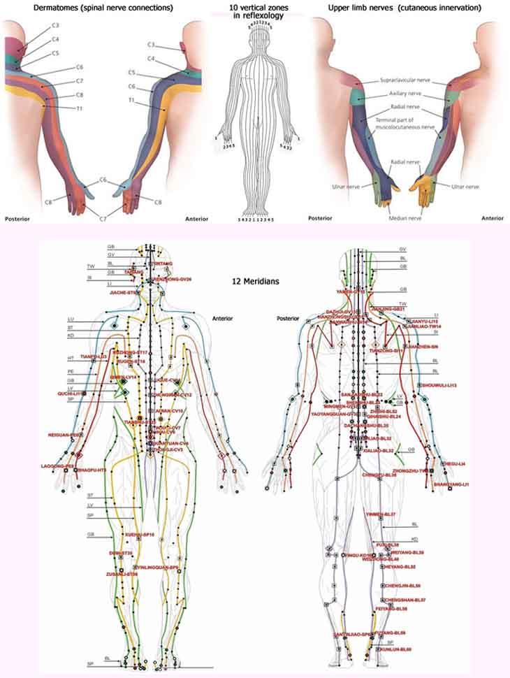 Hand reflexology charts! Hand-reflexology-zones-dermatomes-nerves-meridians