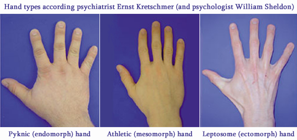 6 Hand signs for Extraversion / Introversion! - Page 2 Kretschmer-sheldon-hand-types