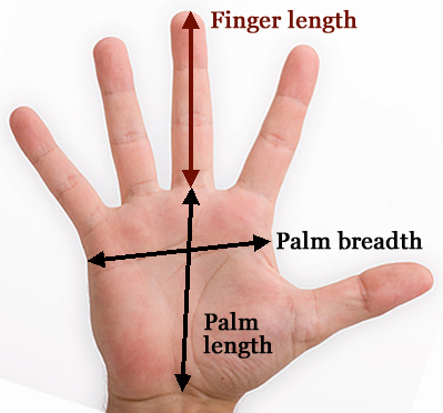 Do you have normal finger length? [locked] - Page 4 Finger-length-measurement