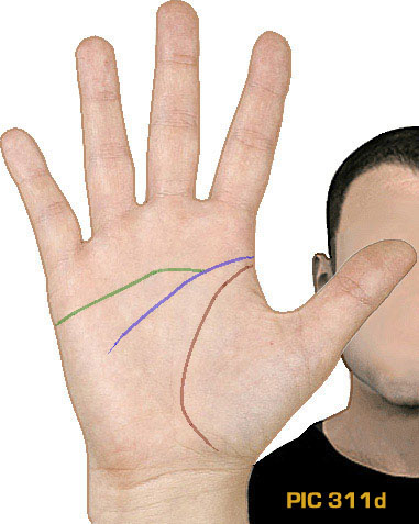 NEW INSIGHTS: How your primary palmar lines relate to your intelligence! Hand-lines-pic-311d