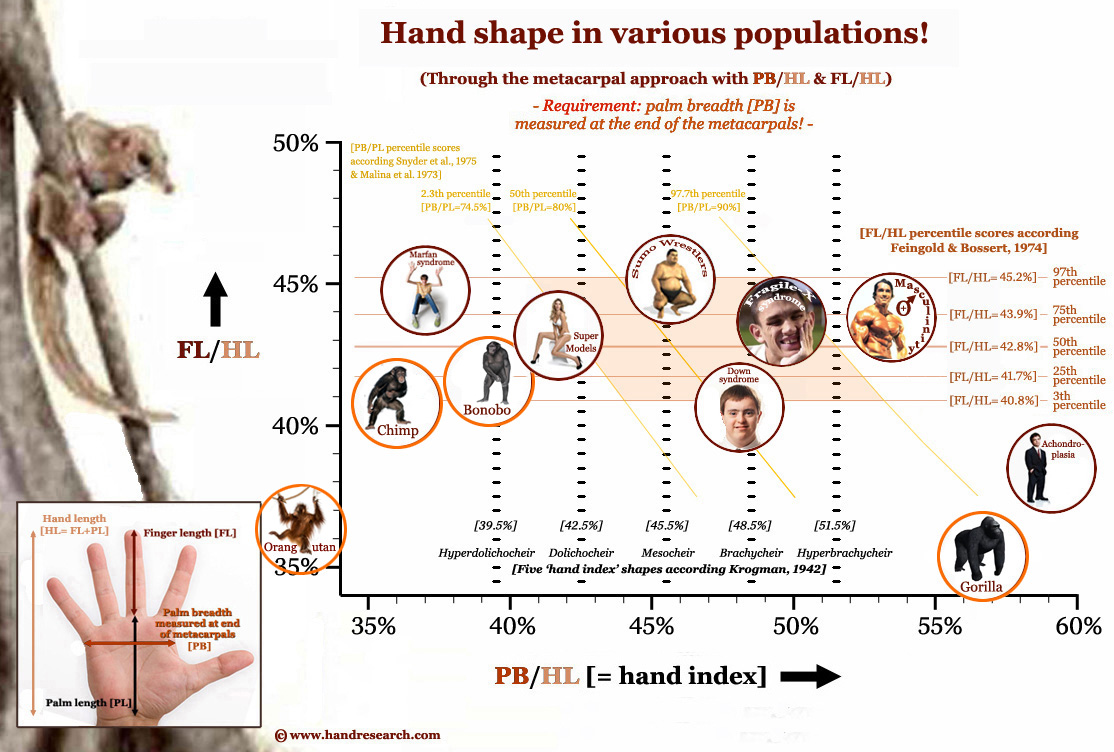 Joe Mangianello's hand Hand-shape-in-various-populations