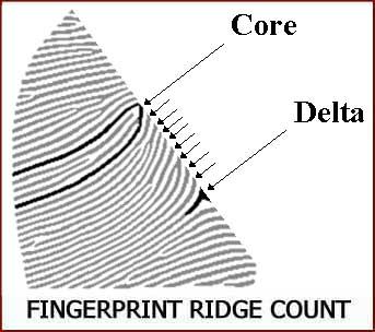 Fingerprints reveal clues about congenital heart defects! Fingerprint-ridge-count