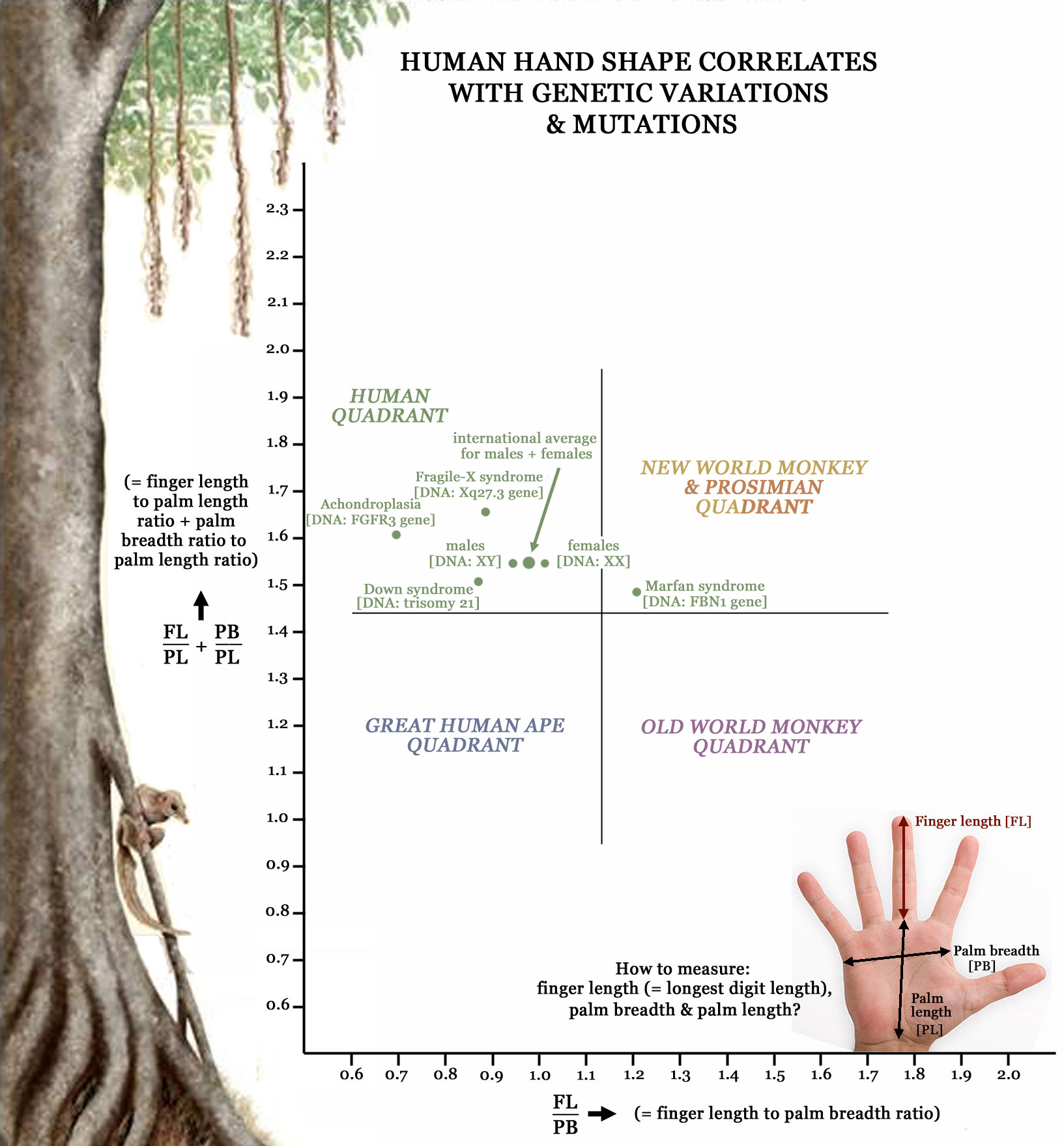 Primatology palm reading! Primate-hands-family-tree-hand-shape-genetics