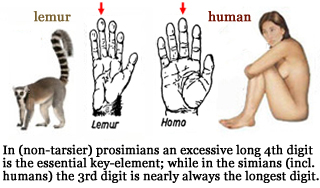 1 Significant Difference Between 5E System and LP(Life Purpose) System - Page 4 Primate-hands-prosimians-simians