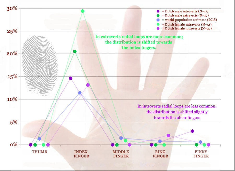 Radial loop fingerprints: what are the facts? Radial-loop-distribution-fingerprints-extraverts-introverts