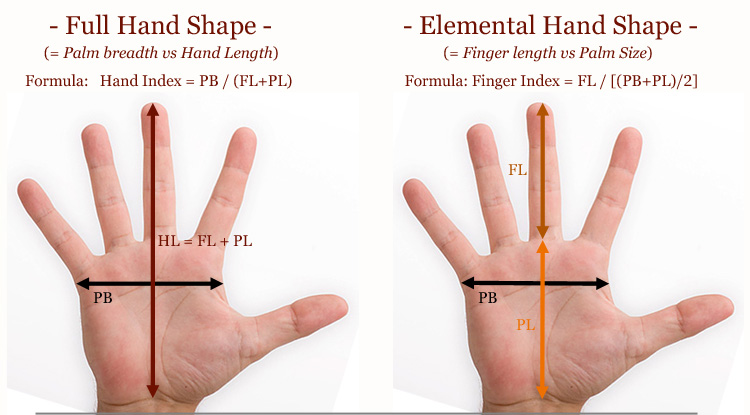 Find your elemental hand shape in 4 easy steps! Full-hand-shape-vs-elemental-hand-shape