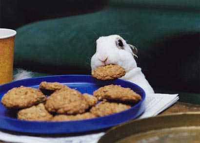 Former Camelot Mod Lita Caught Lying  and Banning People For Their Political and Spiritual Beliefs  - Page 3 Bunny-cookie