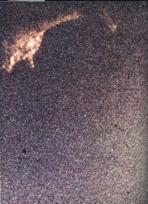 Une nouvelle photo de Nessie Loch_ness_monster