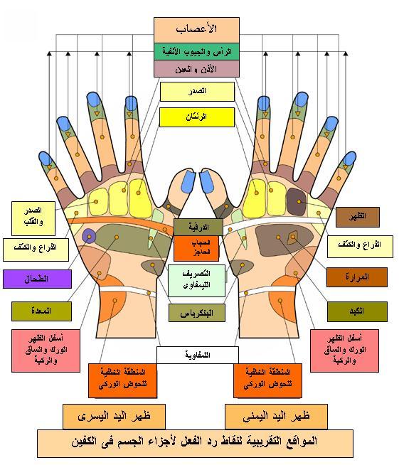 العلاج بالطب الصيني عن طريق اليد والقدم 47308hayah