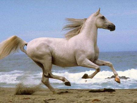 مجموعة صور للحصان والفرس والمهر بكل أنواعه 183255
