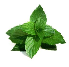 معلومات عن نبات النعناع 39438