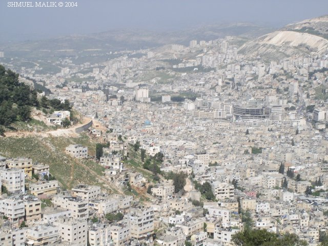 فلسطين إسطورة يكتبها التاريخ 43018