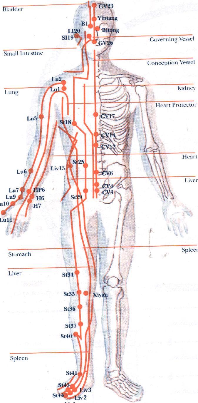 Vježbama do zdravlja i lijepog izgleda Meridians