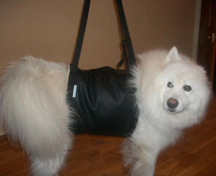 Modes de transport pour petits / vieux chiens qui fatiguent vite - Page 6 0000190