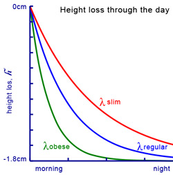 Variación de estatura a lo largo del día (por horas) Height-loss