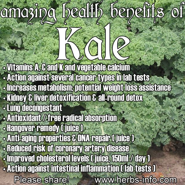 The Amazing Health Benefits Of Kale The-Amazing-Health-Benefits-Of-Kale1