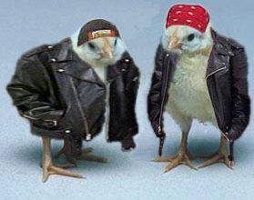 Humore montazhi dhe foto tjera humoristike - Faqe 2 Bikerchicks