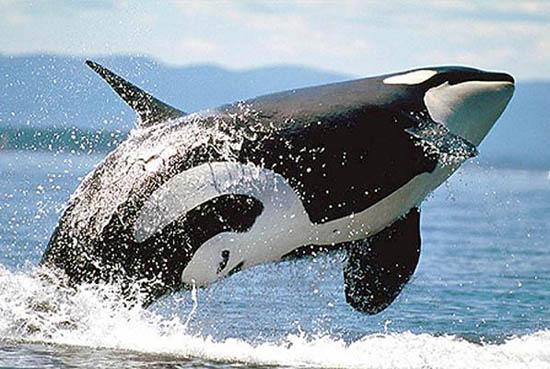 طيور وحيوانات بريه Whale3