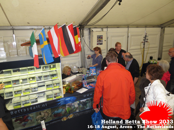 Bettas4all presents the Holland Betta Show 16-18 August 2013 HBS2013-16