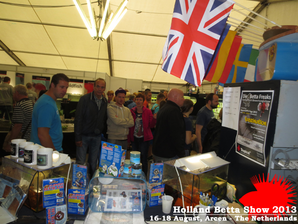 Bettas4all presents the Holland Betta Show 16-18 August 2013 HBS2013-17