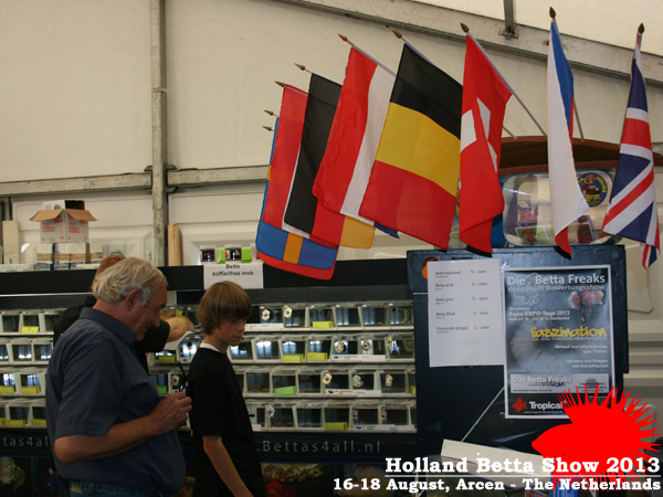 Bettas4all presents the Holland Betta Show 16-18 August 2013 HBS2013-23