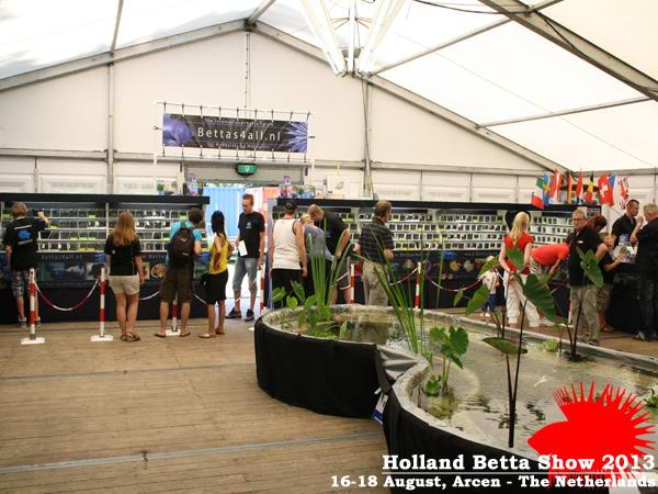 Bettas4all presents the Holland Betta Show 16-18 August 2013 HBS2013-26