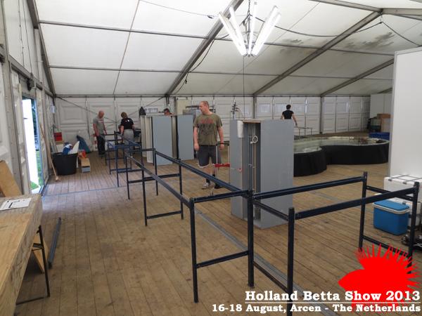 Bettas4all presents the Holland Betta Show 16-18 August 2013 HBS2013-4