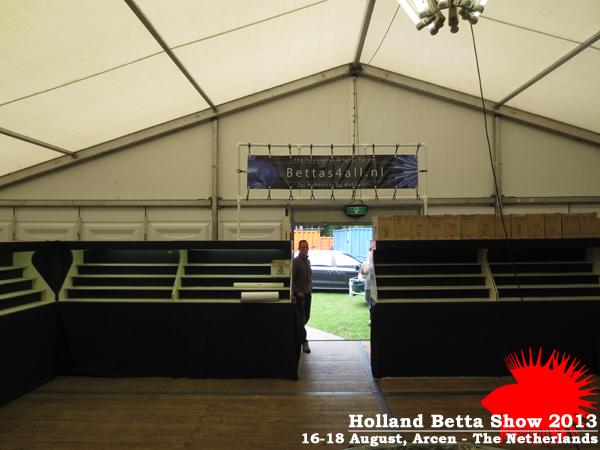 Bettas4all presents the Holland Betta Show 16-18 August 2013 HBS2013-5