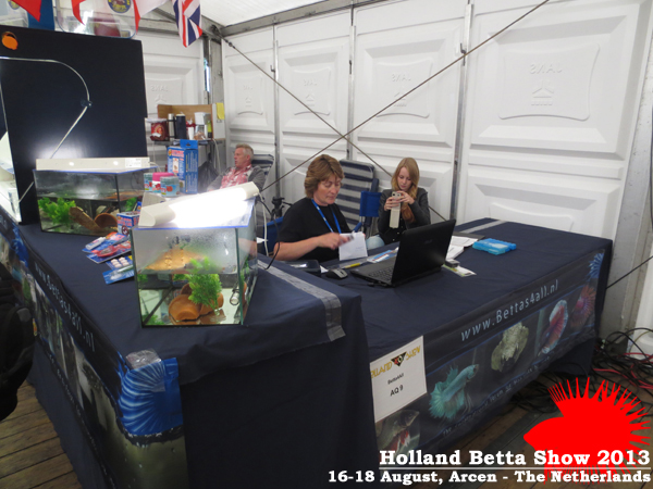 Bettas4all presents the Holland Betta Show 16-18 August 2013 HBS2013-6