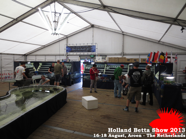 Bettas4all presents the Holland Betta Show 16-18 August 2013 HBS2013-7