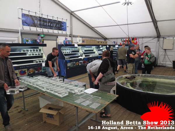 Bettas4all presents the Holland Betta Show 16-18 August 2013 HBS2013-8